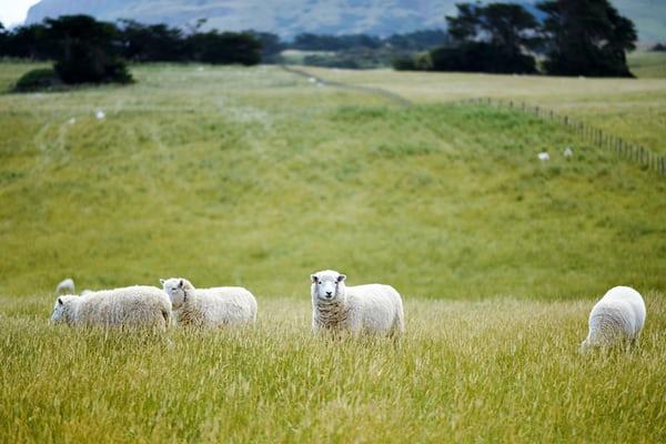 人工智慧讓農牧業變得不一樣了!不僅能夠打造完美蔬菜園,還能辨識牛臉呢!